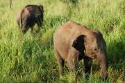 Sloni na safari II.