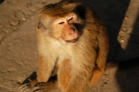 Opice III.