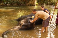 Koupání slona