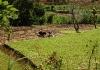 Ukázka místního zemědělství