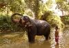 Slonní sprcha