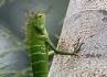 Chameleon I.