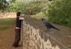 Mirka a pták