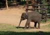 Sloní miminko