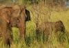 Sloni na safari I.